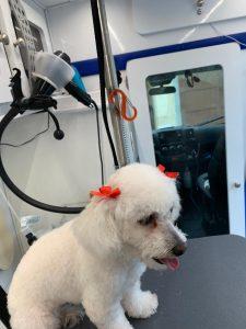 st-jude-dog-grooming (20)