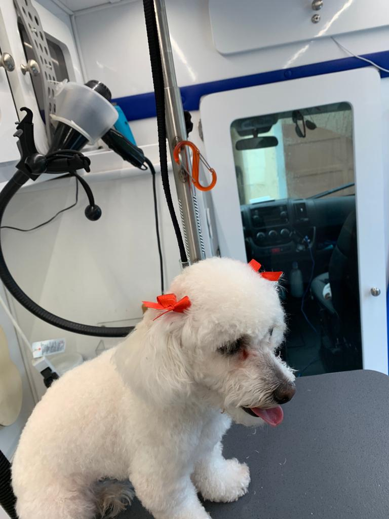 st-jude-dog-grooming (20)