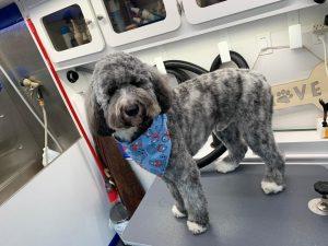 st-jude-dog-grooming (21)