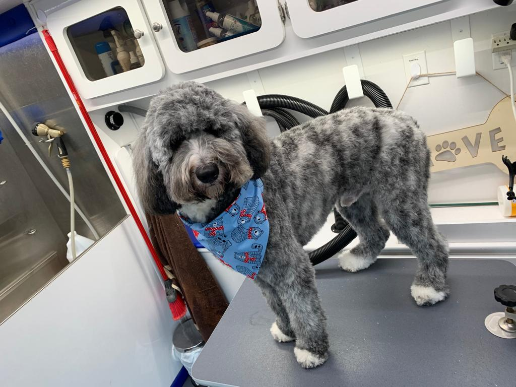 st-jude-dog-grooming (21)