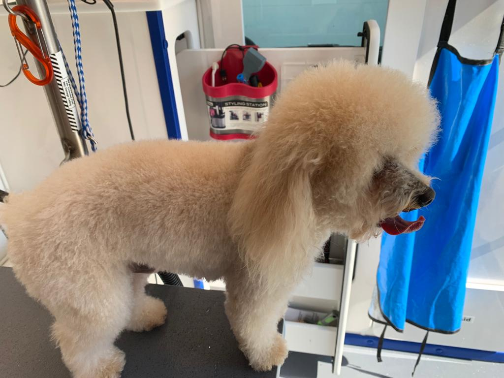 st-jude-dog-grooming (22)