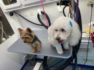 st-jude-dog-grooming (4)