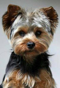 st-jude-dog-grooming (9)