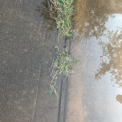 Garden mulch trimmed trees and grass