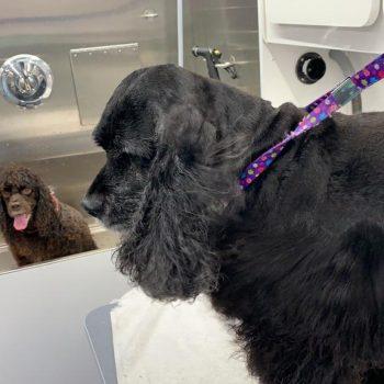 st-jude-dog-grooming (15)